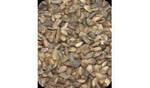 SOSNA (nasiona sosny)  200 g