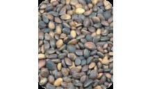 Versele-Laga - Orzechy cedrowe 1 kg