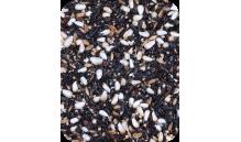 Quiko - Mieszanka do kiełkowania - Dzikie Ptaki 1 kg