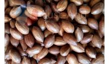 Orzechy Pekan ( Pecan ) 250 g