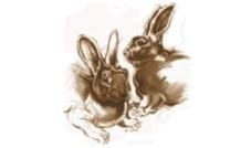 Deli Nature - Cunimax 1 kg - Granulat dla królika (rozważany)