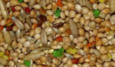 Deli Nature 11 - Papużka Colormix  1 kg
