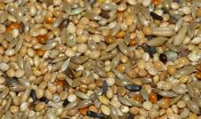 Deli Nature 66 Mieszanka dla papużki Super 1 kg