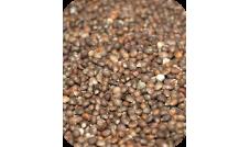 Perilla brązowa - 500 g