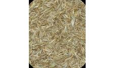 Nasiona trawy (trawa) 500 g