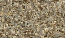 Quiko - Nasiona ostu 100 g