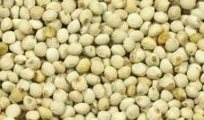 Biała perilla 500 g - Quiko