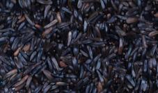 Murzynek - Quiko 300 g